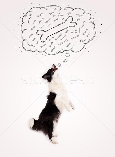 Border collie gedachte bel denken bot cute zwart wit Stockfoto © ra2studio