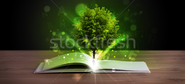 Open book with magical green tree and rays of light Stock photo © ra2studio