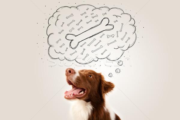 Бордер колли мысли пузырь мышления кость Cute коричневый Сток-фото © ra2studio