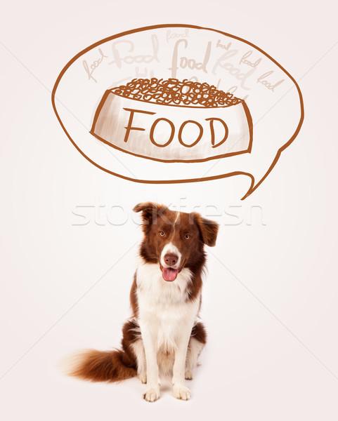 Cute Бордер колли продовольствие коричневый белый Сток-фото © ra2studio