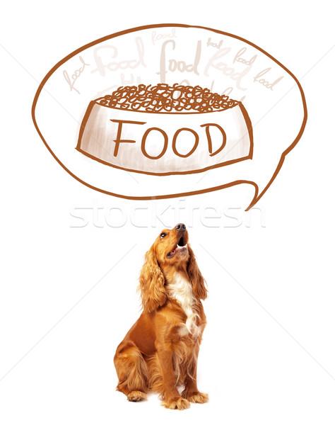 Aranyos álmodik étel gondolkodik tál gondolatbuborék Stock fotó © ra2studio