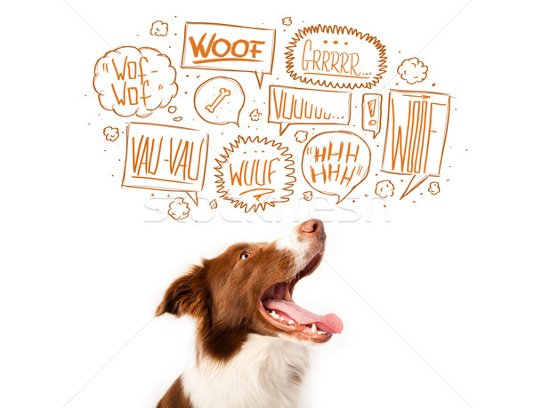 Cute hond bubbels bruin witte border collie Stockfoto © ra2studio