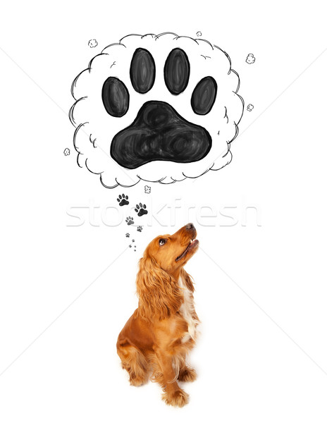 Cute cocker spaniel with paw above her head Stock photo © ra2studio