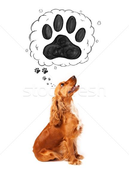 Cute patte au-dessus tête pense bulle de pensée Photo stock © ra2studio