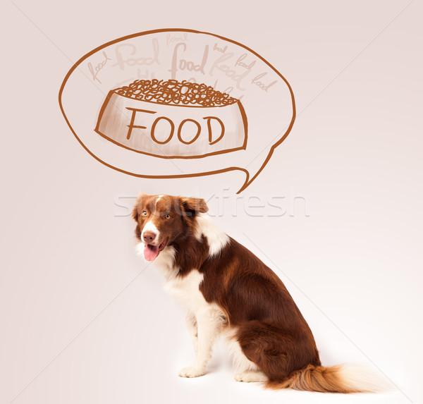 Cute border collie voedsel bruin witte Stockfoto © ra2studio