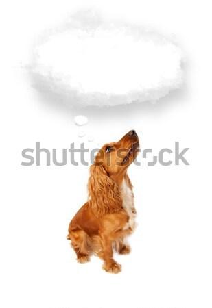 Cute cocker spaniel with copy space Stock photo © ra2studio