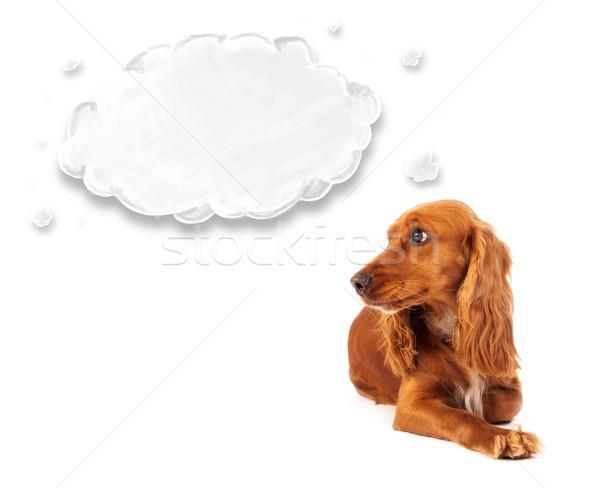 Cute cocker spaniel with cloud Stock photo © ra2studio