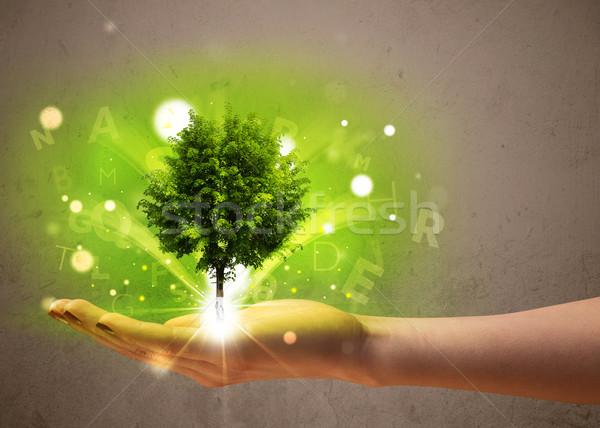 Glühend Baum zunehmend Hand Frau Stock foto © ra2studio