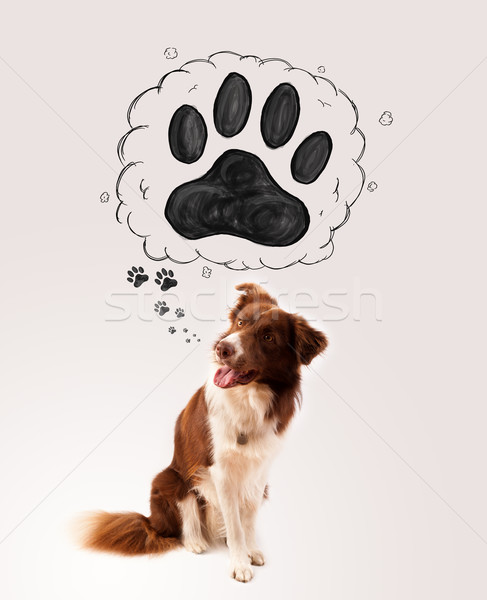Cute border collie patte au-dessus tête brun Photo stock © ra2studio