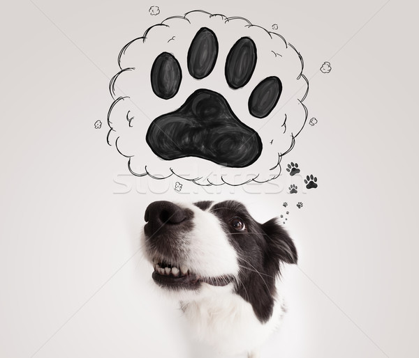 Photo stock: Cute · border · collie · patte · au-dessus · tête · blanc · noir