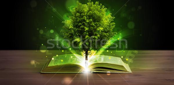 開いた本 緑の木 日光 光 木製 ストックフォト © ra2studio