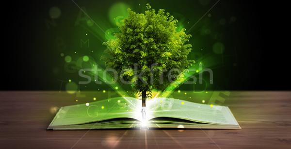 Nyitott könyv varázslatos zöld fa sugarak fény fából készült Stock fotó © ra2studio