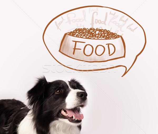 Aranyos juhászkutya álmodik étel feketefehér gondolkodik Stock fotó © ra2studio