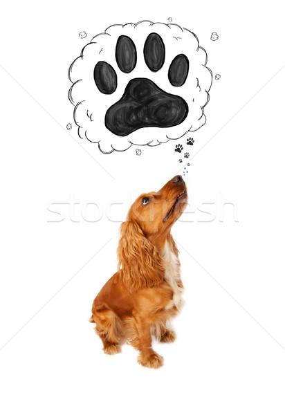 Cute zampa sopra testa pensare bolla di pensiero Foto d'archivio © ra2studio