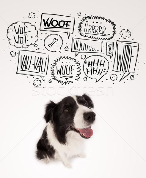 Cute hond bubbels zwart wit border collie Stockfoto © ra2studio