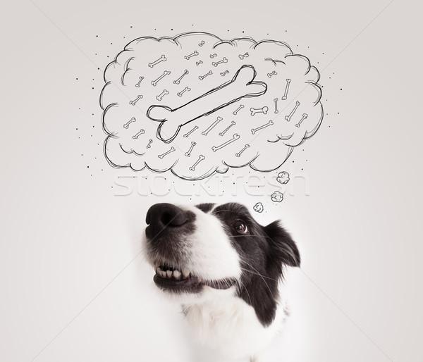 Бордер колли мысли пузырь мышления кость Cute черно белые Сток-фото © ra2studio