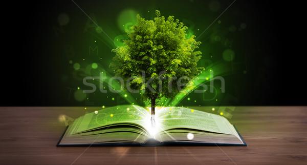 Open boek magisch groene boom stralen licht houten Stockfoto © ra2studio