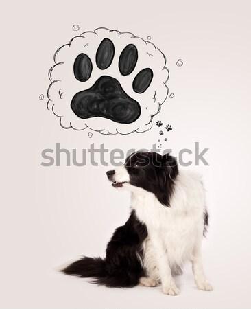 Cute border collie patte au-dessus tête blanc noir Photo stock © ra2studio