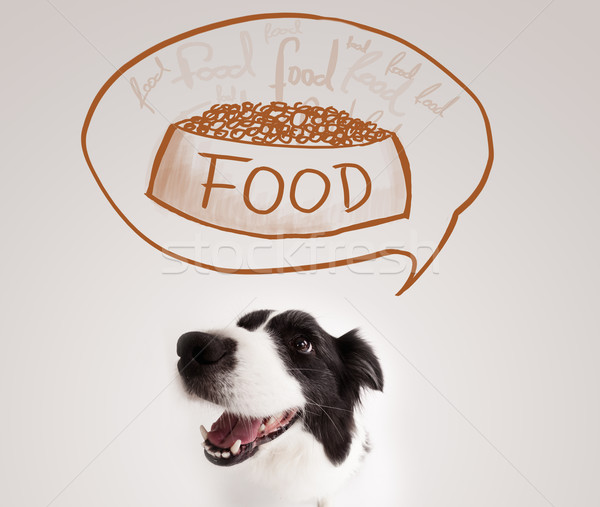 Cute border collie dreaming about food Stock photo © ra2studio