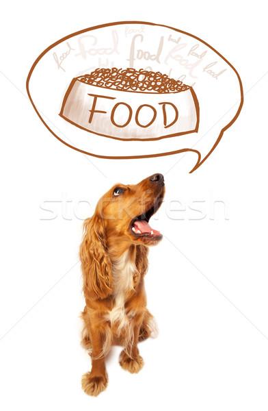 Cute cocker spaniel dreaming about food Stock photo © ra2studio