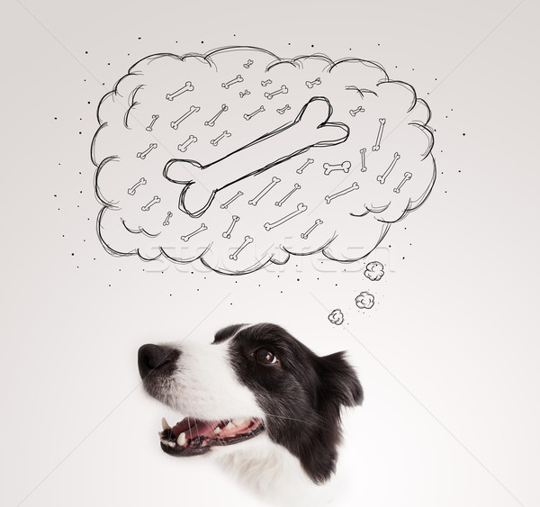 Border collie with thought bubble thinking about a bone Stock photo © ra2studio