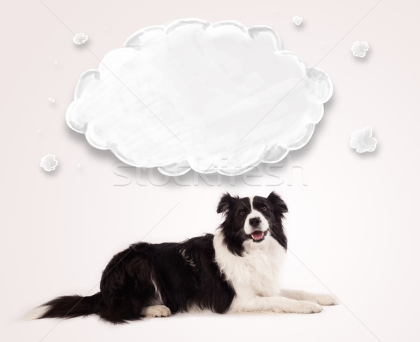 Cute border collie with empty cloud Stock photo © ra2studio