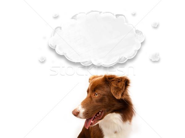 Cute Бордер колли пусто облаке коричневый белый Сток-фото © ra2studio