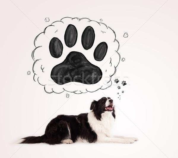 Cute Бордер колли лапа голову черно белые Сток-фото © ra2studio