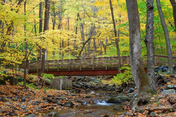 Autumn wood bridge Stock photo © rabbit75_sto