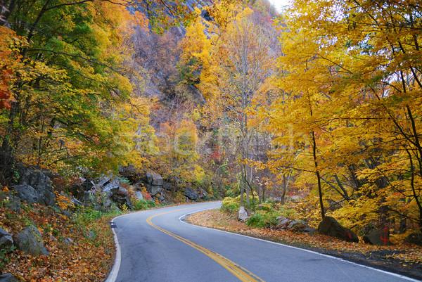 Autumn woods foliage with road Stock photo © rabbit75_sto