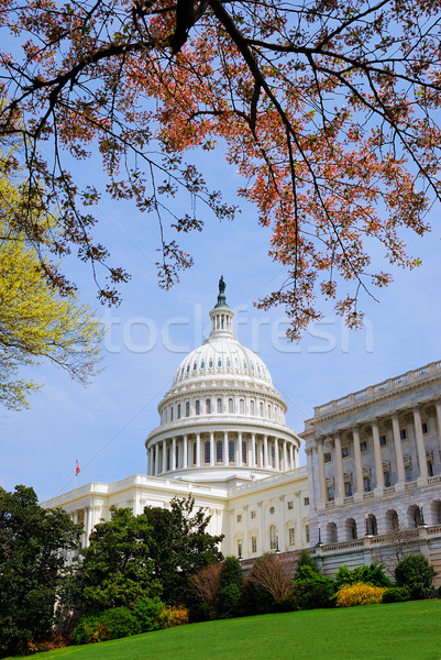 Washington DC amerykański Hill budynku drzewo trawnik Zdjęcia stock © rabbit75_sto