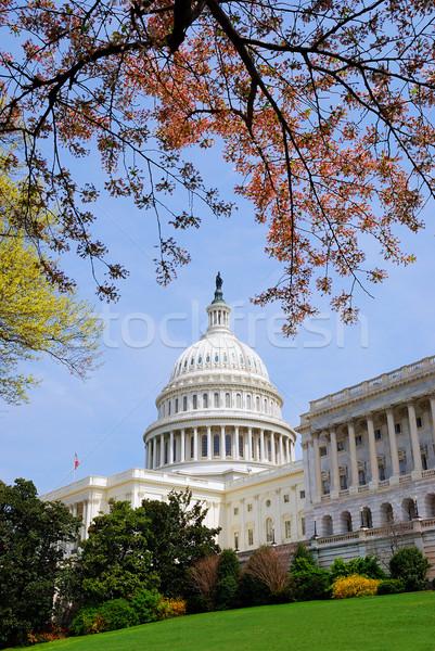 Washington DC amerikaanse heuvel gebouw boom gazon Stockfoto © rabbit75_sto