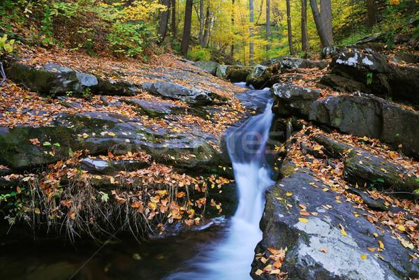 осень ручей желтый клен деревья Сток-фото © rabbit75_sto