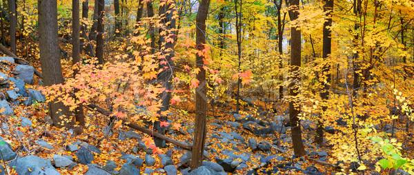 ősz erdő lomb erdő panoráma színes Stock fotó © rabbit75_sto