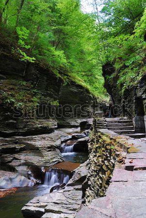 Patak erdő kövek folyam park New York Stock fotó © rabbit75_sto