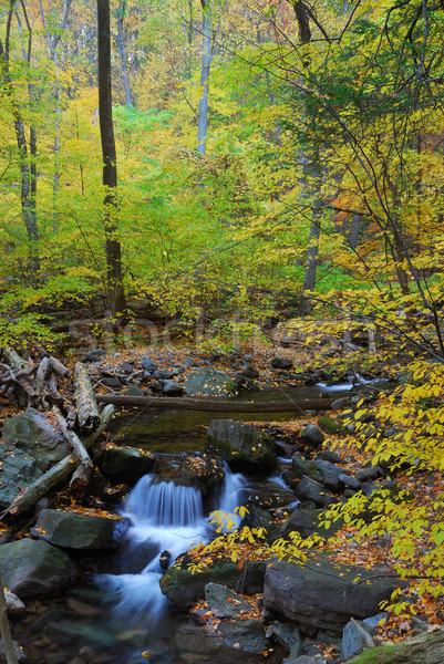 Autumn creek in forest Stock photo © rabbit75_sto