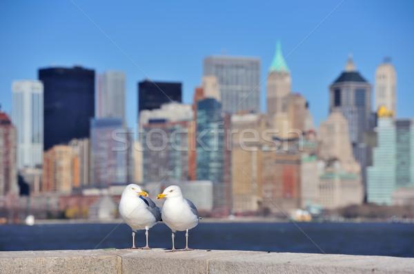 Seagull Stock photo © rabbit75_sto
