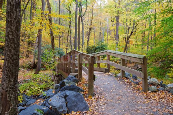 Foto stock: Madeira · ponte · outono · floresta · enseada · amarelo
