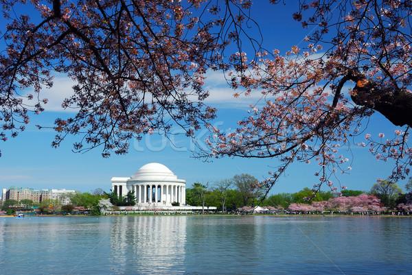 Washington DC cherry blossom Stock photo © rabbit75_sto
