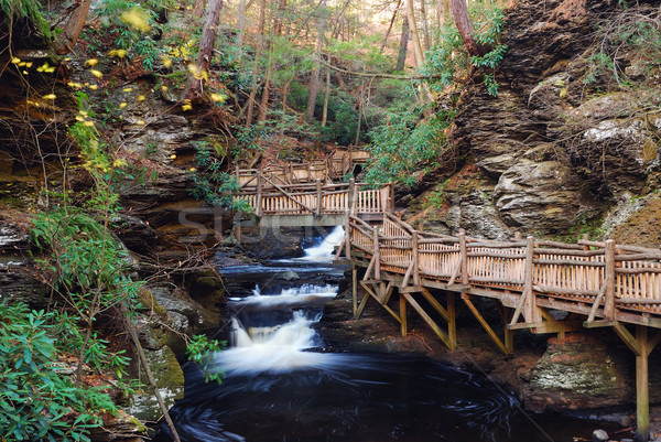 Outono enseada caminhadas floresta paisagem Foto stock © rabbit75_sto