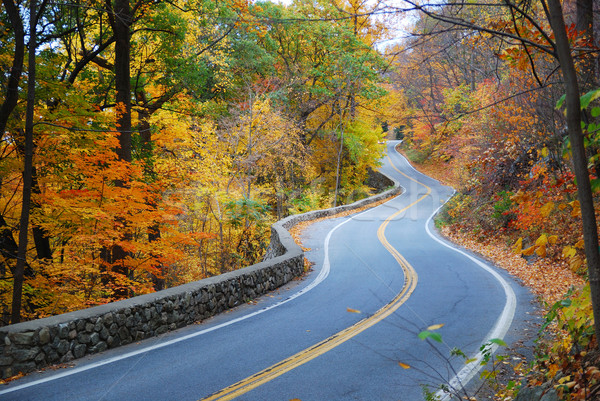 Winding Autumn road with colorful foliage Stock photo © rabbit75_sto