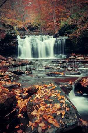 Foto stock: Enseada · outono · amarelo · bordo · árvores