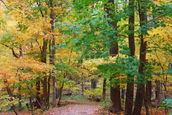 Foto stock: Caminhadas · trilha · outono · floresta · amarelo · bordo