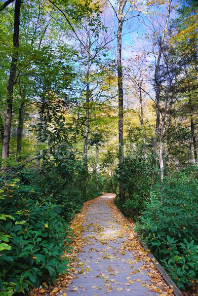 Najaar wandelen parcours loof bos landschap Stockfoto © rabbit75_sto