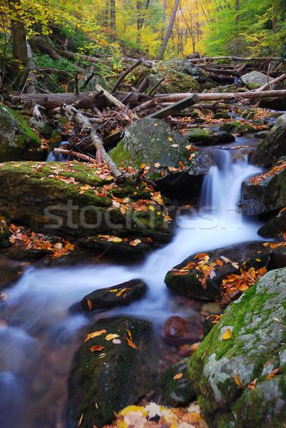 Torrente montagna autunno primo piano giallo acero Foto d'archivio © rabbit75_sto