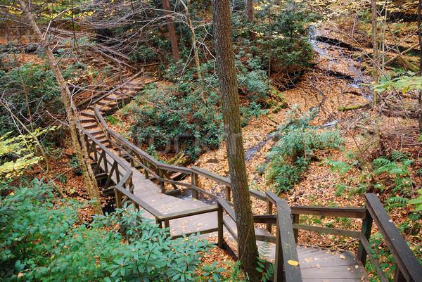 Autumn hiking trail Stock photo © rabbit75_sto