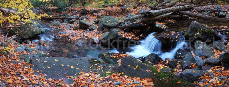creek closeup with yellow maple trees panorama Stock photo © rabbit75_sto