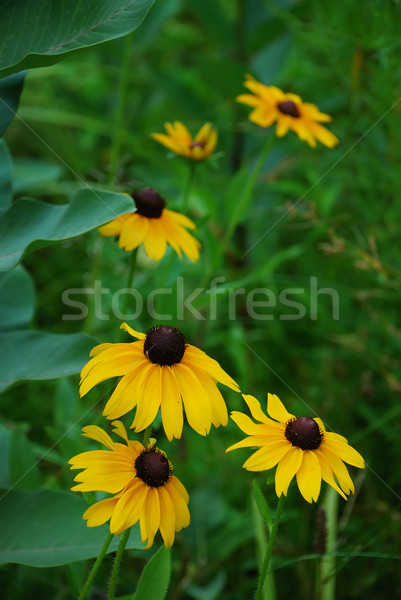 Virág virágok közelkép fű kert nyár Stock fotó © rabbit75_sto