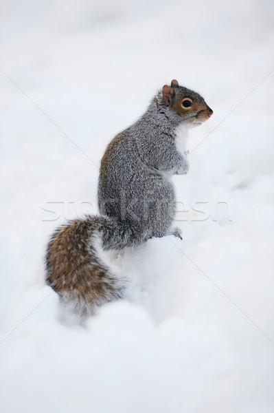 Sincap kar kış beyaz Central Park Stok fotoğraf © rabbit75_sto