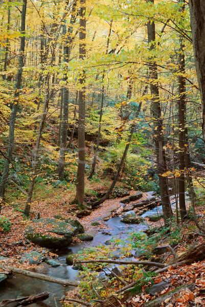 Najaar esdoorn hout bos Geel bomen Stockfoto © rabbit75_sto